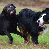 Hundeunsinn