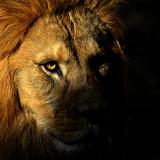 Löwenherz II