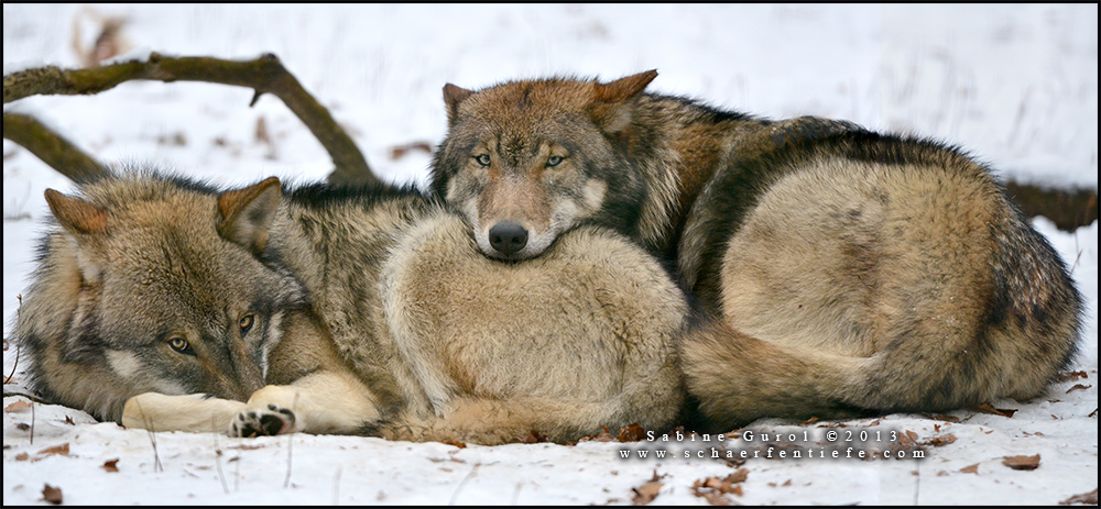 wolffriends