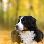 Jodie im Hildesheimer Herbst
