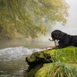 Jodie im Herbstnebel